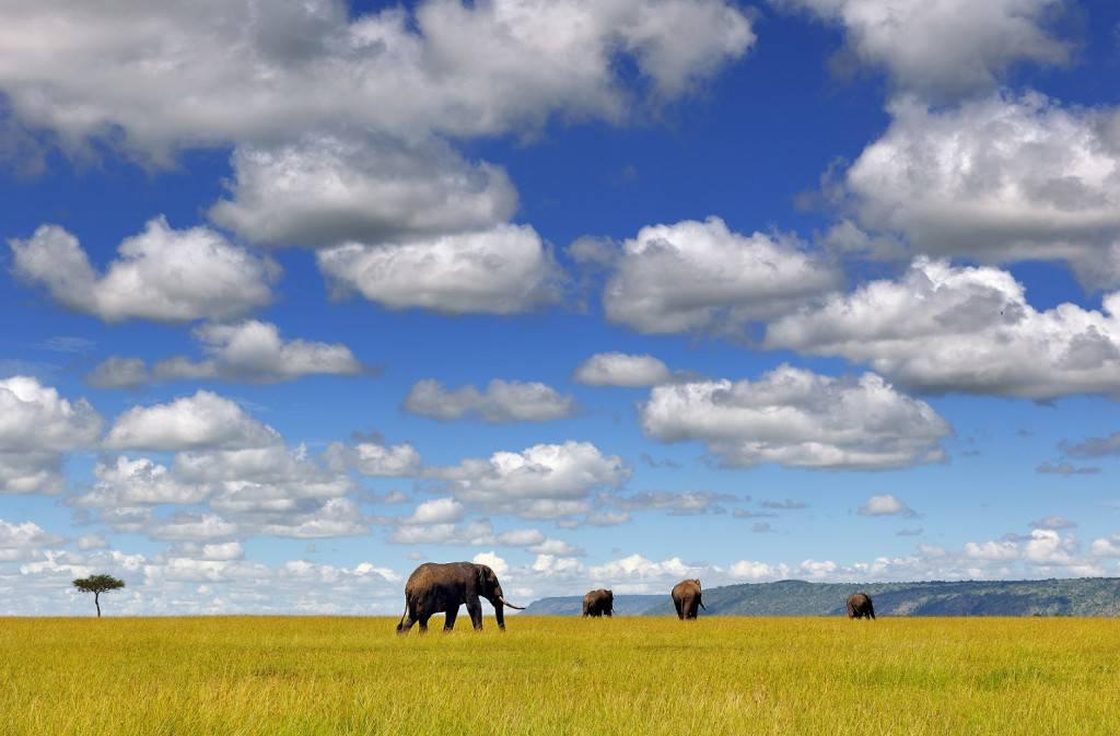 Nikon School Travel_Franco Cappellari_Kenya