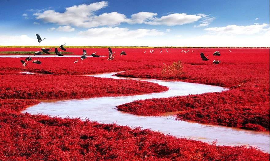 Spiaggia Rossa, Panjin, Cina.