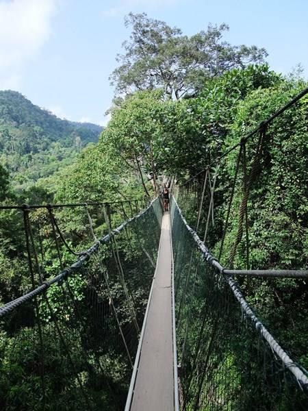 Taman Negara Canopy Walkway, Malesia