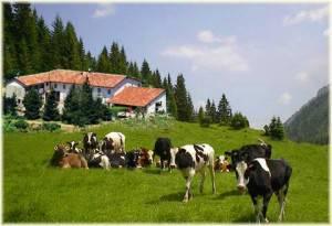Agriturismo (immagine dal web)