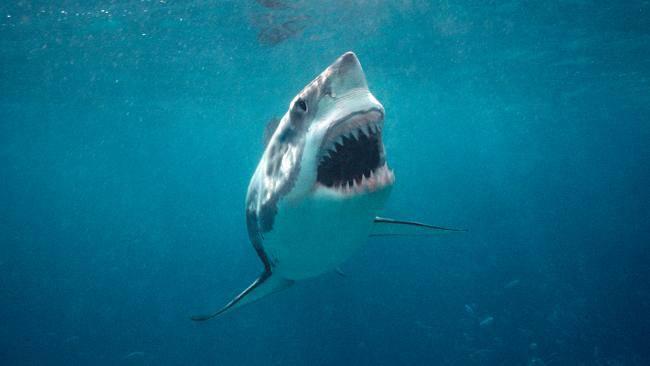 australia squalo