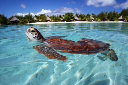 Bora Bora: il paradiso terrestre tra resort da sogno e mare ...