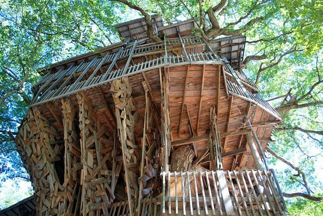Curiosit ecco la casa sull albero pi grande al mondo for Piani di casa del vecchio mondo