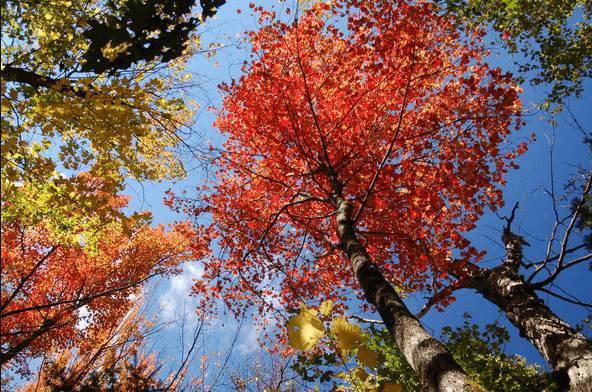 Foliage, il motivo per cui amerete l'autunno