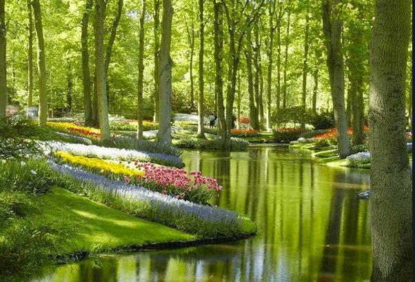 Olanda il giardino fiorito pi fotografato al mondo for Giardino fiorito