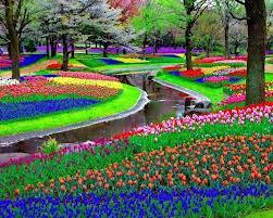 Olanda il giardino fiorito pi fotografato al mondo - Alberi bassi da giardino ...
