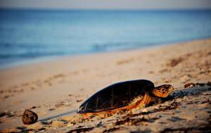 seychelles e1336578869825 Seychelles: quali sono le isole più belle?