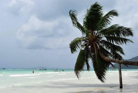 View a palm tree on a beach on Praslin i