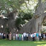 sunland-baobab-esterno