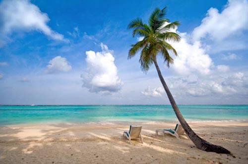 Island Tropics Jacksonville Florida