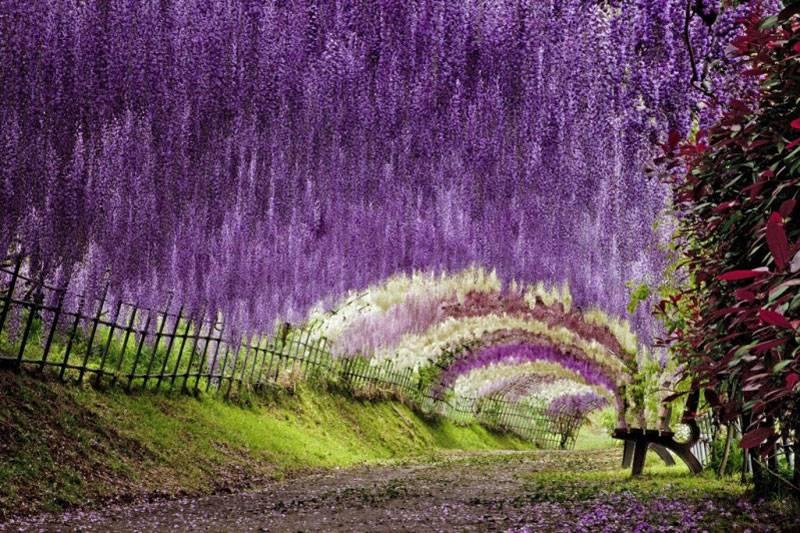 Giappone cosa vedere ecco i luoghi pi incredibili for Piani casa del sud del paese